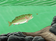 Fly Fisherman Paintings - Rainbow Trout - Enticed from the pool by Ralph Martens