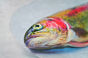 Rainbow Metal Prints - Rainbow Trout On Plate Metal Print by Image by Catherine MacBride