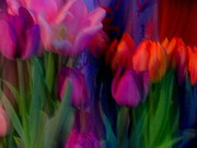 Amy Bradley - Rainbow Tulips