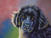 Animal Pastels Pastels Prints - Rainbows and Sunshine - Newfoundland Puppy Print by Michelle Wrighton