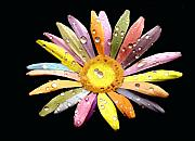 Rain Digital Art - Raindrops on a Rainbow Daisy by Saleires Art
