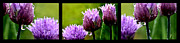 Allium Schoenoprasum Prints - Raindrops on Chives Triptych Print by Thomas R Fletcher