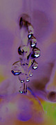 Purple Digital Art - Raindrops on grass by Carol Lynch
