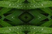 Rain Digital Art - Raindrops on Green Leaves Collage by Carol Groenen
