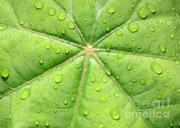 Raindrops Prints - Raindrops on Leaf Print by Carol Groenen