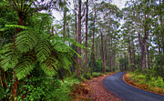 Rainforest - Port Macquarie - Australia Print by Bryan Freeman