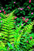 Puerto Rico Framed Prints - Rainforest Ferns and Impatiens Framed Print by Thomas R Fletcher