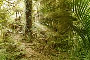 Wilds Prints - Rainforest Print by Les Cunliffe
