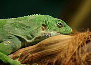 Side View Art - Rainforest Lizard by Brian T. Nelson