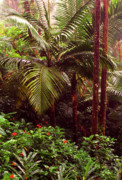 Verdant Prints - Rainforest Palm Trees  Print by Thomas R Fletcher