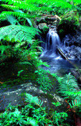 Verdant Prints - Rainforest waterfall Print by Thomas R Fletcher