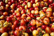 Cooking Prints - Rainier Cherries Print by Tanya Harrison