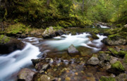 Moss Green Prints - Rainier Creek Flow Print by Mike Reid
