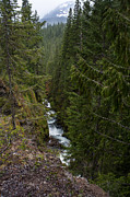 Waterfall Prints - Rainier Creek Vista Print by Mike Reid