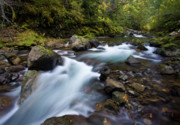 Moss Green Prints - Rainier Fall Creek Flow Print by Mike Reid