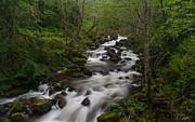 Rainier Forest Flow Print by Mike Reid
