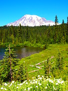 Mt Rainier Stream Framed Prints - Rainier Meadow Framed Print by Jim Moore