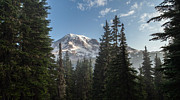 Mount Rainier Framed Prints - Rainier Morning Framed Print by Mike Reid