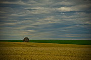 Rural Landscapes Photo Metal Prints - Rainy Day Blues Metal Print by Dan Mihai
