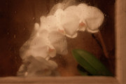 Rainy Photos - Rainy Day Orchid by Tom Mc Nemar