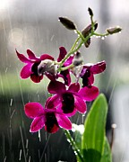 Theresa Willingham - Rainy Day Orchids