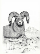 Mountain Goat Drawings - Ram by Mayhem Mediums