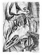 Adam Long Drawings - Ram skull still-life by Adam Long