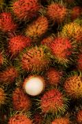 Gloria Richard Maschmeyer Framed Prints - Rambutan Framed Print by Gloria & Richard Maschmeyer - Printscapes