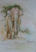 Sri Lankan Artist Paintings - Rampageous Onrush - Asian Tusker by Sasitha Weerasinghe