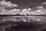 Scrub Prints - Ranch Pond New Mexico Print by Steve Gadomski