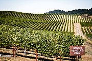 Napa Valley Vineyard Prints - Ranch Vehicles Only Print by Lisa Eryn
