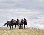 Horse Herd Photo Prints - Range Gang Print by Greg Rushton Photography