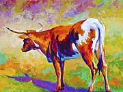 Texas Longhorn Cow Framed Prints - Range Rover II - Texas Longhorn Framed Print by Marion Rose