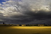 Crops Photos - Rapefield Under Dark Sky by Heiko Koehrer-Wagner