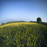 Rapeseed Photos - Rapeseed blossom by Angel  Tarantella