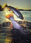 Trout Greeting Card Photo Posters - Rare Solar Eclipse Poster by Brian Pelkey