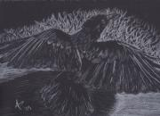 Raven Drawings Originals - Raven by Ashley Patterson