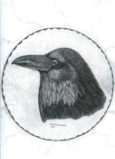 Raven Drawings Prints - Raven Bird of the North Print by Don  Gallacher