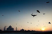 Yamuna River Posters - Raven Birds Flying Over Yamuna River At Sunset Poster by © Kristian Leven