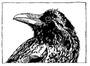Edgar Allan Poe Drawings - Raven Calculations by Julia Forsyth