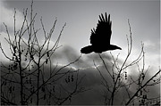 Meanings Originals - Raven    Fly with Me by Mirza Ajanovic