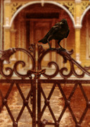 Evil House Framed Prints - Raven on Iron Gate Framed Print by Jill Battaglia