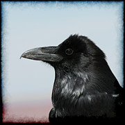 Raven Photos - Raven Profile by Ernie Echols