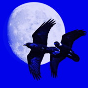 Animal Photography Digital Art - Ravens of the Moon . Blue Square by Wingsdomain Art and Photography