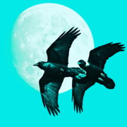 Cyan Digital Art Prints - Ravens of the Moon . Cyan Square Print by Wingsdomain Art and Photography