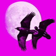 Goth Posters - Ravens of the Moon . Magenta Square Poster by Wingsdomain Art and Photography