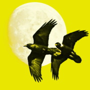 Halloween Digital Art - Ravens of the Moon . Yellow Square by Wingsdomain Art and Photography