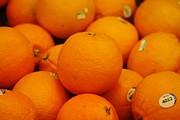 Paul SEQUENCE Ferguson             sequence dot net - Raw Food 47