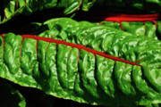Lettuce Photos - Raw Food by Harry Spitz