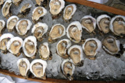 Louisiana Seafood Art - Raw Oysters on Ice by Sean Gautreaux